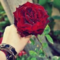 الصورة الرمزية سكون الورد