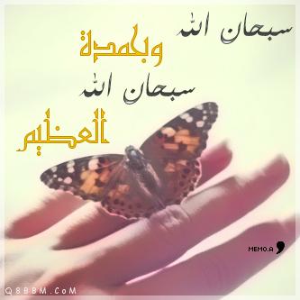 الصورة الرمزية هدو الليل