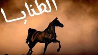 الصورة الرمزية بنت حايل الطنايا